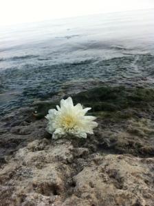 Flor oferenda